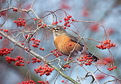 BRD 13 TL0063 01