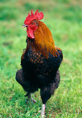 BRD 14 GL0002 01