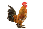 BRD 14 JE0003 01
