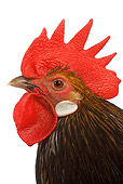 BRD 14 JE0007 01