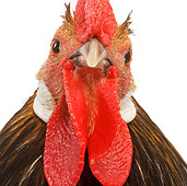 BRD 14 JE0008 01