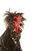 BRD 14 JE0010 01