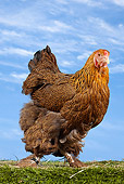 BRD 14 JE0023 01