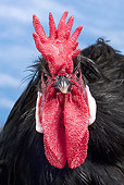 BRD 14 JE0024 01
