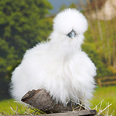 BRD 14 JE0037 01