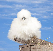BRD 14 JE0038 01