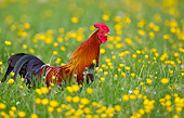 BRD 14 KH0011 01