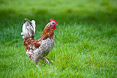 BRD 14 KH0025 01