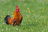 BRD 14 KH0030 01