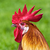 BRD 14 KH0033 01