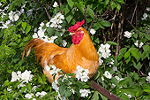 BRD 14 LS0055 01