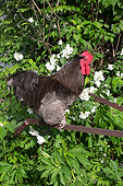 BRD 14 LS0058 01