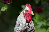 BRD 14 LS0063 01