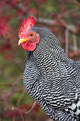BRD 14 LS0072 01