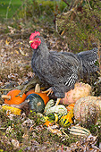BRD 14 LS0078 01