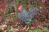 BRD 14 LS0081 01