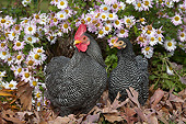 BRD 14 LS0082 01