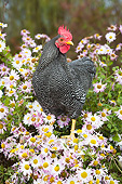 BRD 14 LS0083 01