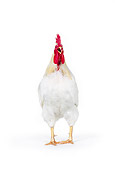 BRD 14 RK0011 01