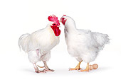 BRD 14 RK0016 03