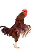 BRD 14 RK0030 01