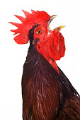 BRD 14 RK0031 04