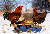 BRD 14 LS0004 01