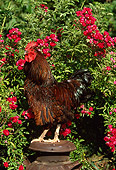 BRD 14 LS0007 01