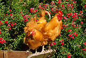 BRD 14 LS0008 01