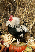 BRD 14 LS0017 01