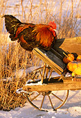 BRD 14 LS0019 01