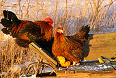 BRD 14 LS0020 01