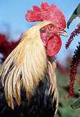 BRD 14 LS0026 01