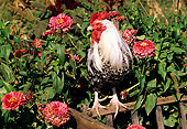 BRD 14 LS0029 01
