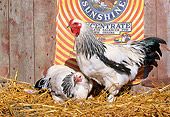 BRD 14 LS0038 01