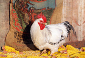 BRD 14 LS0039 01