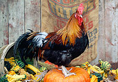 BRD 14 LS0041 01