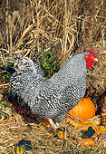 BRD 14 LS0042 01