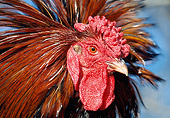 BRD 14 LS0050 01