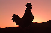 BRD 14 RK0026 03