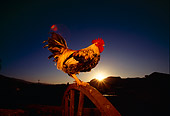 BRD 14 RK0029 01