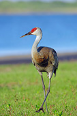BRD 16 AC0004 01
