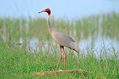 BRD 16 AC0005 01