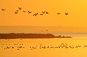 BRD 16 AC0007 01