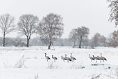 BRD 16 AC0009 01