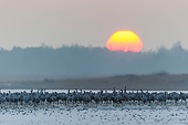 BRD 16 AC0013 01
