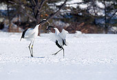 BRD 16 GL0001 01