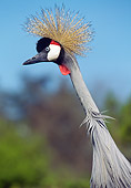 BRD 16 GL0002 01
