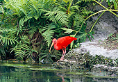 BRD 16 GL0005 01