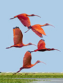 BRD 16 JE0002 01